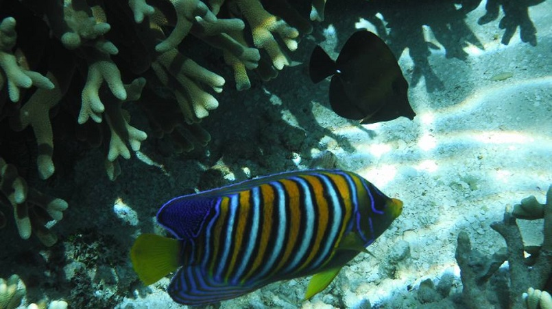 Fish swimming in a marine protected area