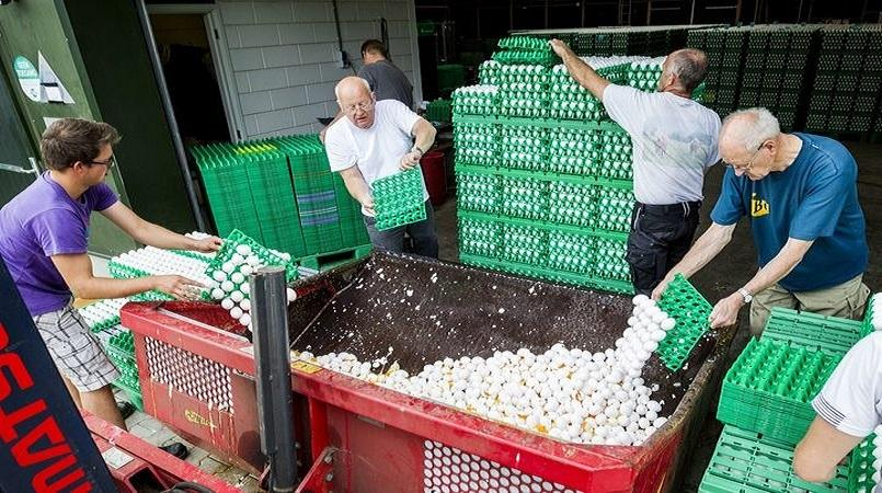 Dutch egg scandal: 17 nations affected