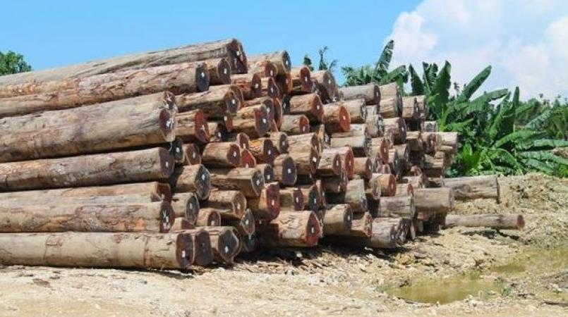 Solomons Forest Assoc Supports Logging Crackdown Loop