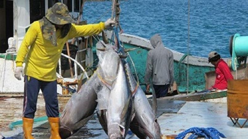 State of the tuna report working smarter for our tuna for Solomons island fishing report