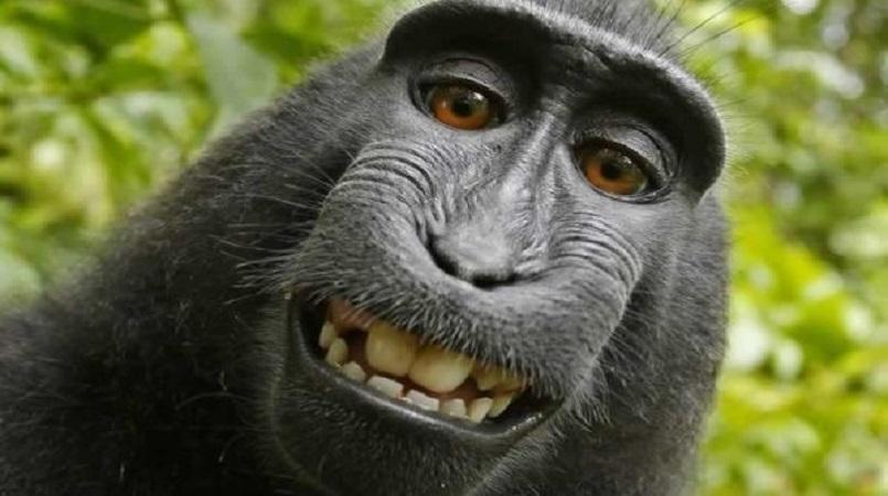 Monkey selfie case settled