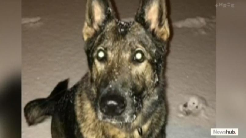 Dog mistakenly flown overseas returned to family