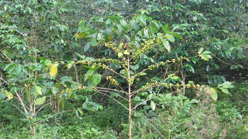 Garcinia cambogia 4000 mg
