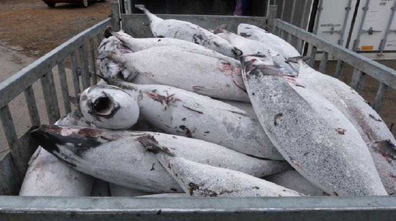 Tokelau agreement for albacore gets a boost