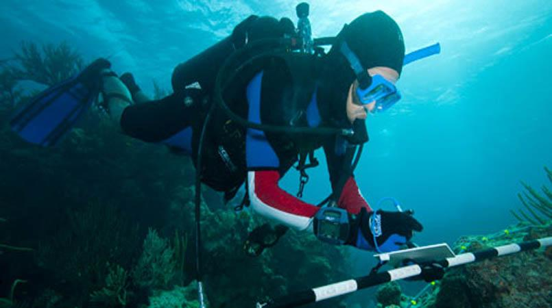scuba diving research paper Mfr paper 1192 scuba diving methods for fishing system s evaluation donald a wickham and john w watson, jr abstract-the scuba diving methods and operational procedures used by.