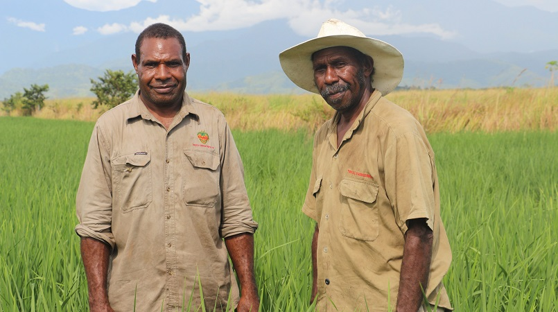 workers-rice-field