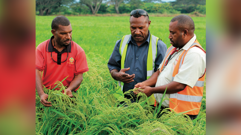 PNG moves to lower costs for agricultural exports: Report