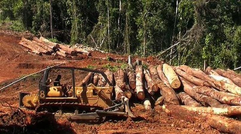 Crackdown on Illegal logging in Solomon Islands   Loop Nauru